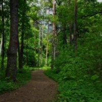 Весенний лес. :: Laborant Григоров