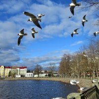 Чайки наз заливом :: Светлана