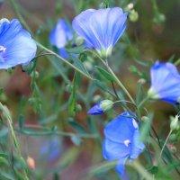 Нежное цветение... :: Тамара (st.tamara)
