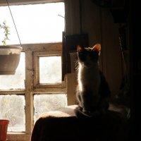 Кошка у окна :: Boris Trikhleb