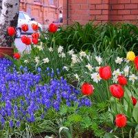 Городские цветы (1) :: Полина Потапова
