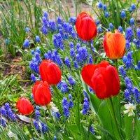 Городские цветы (3) :: Полина Потапова