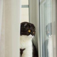 Кошачьи будни :: Елена Зудова
