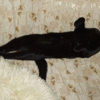 А так мой кот спит когда сыт :: Михаил Костоломов