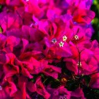 Разные цветы глядят на нас :: Александр Липовецкий