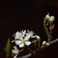 Когда яблони цветут................. :: Андрей + Ирина Степановы