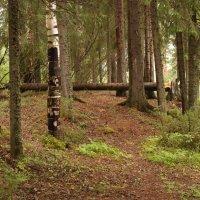В лесу. :: владимир