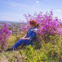 На сопках багульник цветёт! :: Ирина Антоновна