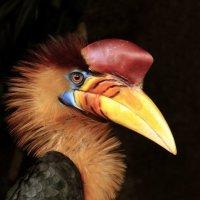 Птица-носорог. :: Alexander Andronik