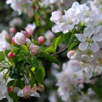нежность весны :: Горкун Ольга Николаевна