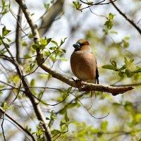 майское настроение :: linnud