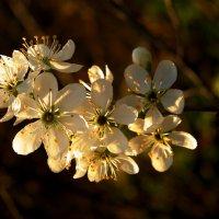 Цветущий май :: Нина северянка