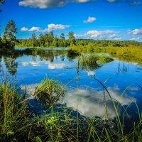 Озеро в Карелии :: Маргарита Си
