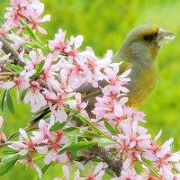Дождались весну !!!!! :: Hаталья Беклова