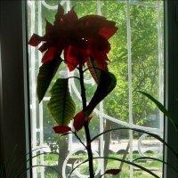 8 мая за окном зеленела весна :: Нина Корешкова