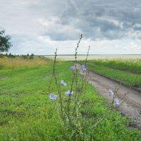 полевая дорога :: Михаил