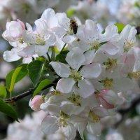 весна :: Горкун Ольга Николаевна