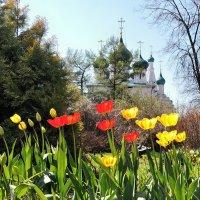 Цветущий май, в губернаторском саду Ярославля :: Николай Белавин