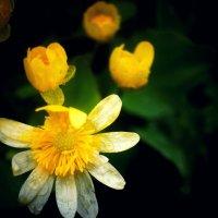 Цветок :: Кристина Юричковская