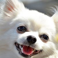 улыбка :: александр