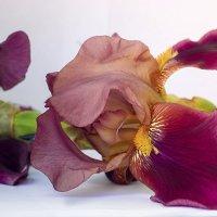 Цветок :: Rina Klimenko