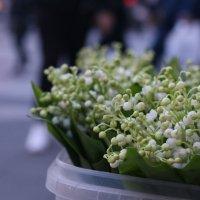 Цветы :: Eugene B