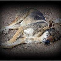 Бездомная собака :: Вера