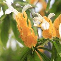 Перуанский цветок :: Gennadiy Karasev