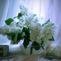 Весенний завтрак :: Татьяна Евдокимова
