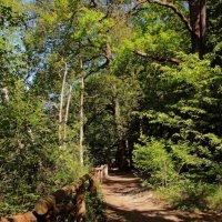 По лесной дорожке :: Alexander