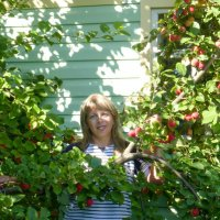 богатый урожай :: Елена Кордумова