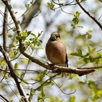 утопая в зелени :: linnud
