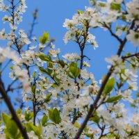 весна :: Ольга (Кошкотень) Медведева