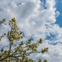кусочек весеннего неба :: Ольга (Кошкотень) Медведева