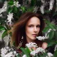 Черёмуха :: Виктория Андреева