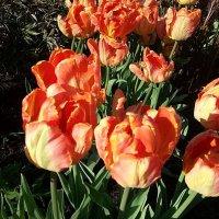 Яркий праздник цветов ! :: Наталья Владимировна