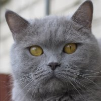 Кот по кличке Грей :: Сергей