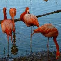 фламинго :: Galina Leskova