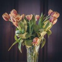 букетик тюльпан :: Евгения Назарова