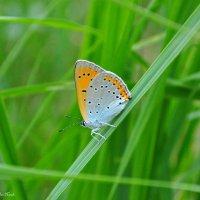 бабочка :: Наталия Захарова