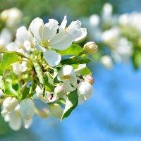 Однако весна)) :: Олег Меркулов