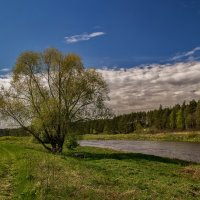 Берега реки Клязьмы :: Андрей Дворников