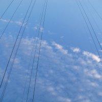 Воздушные струны :: Светлана Сейбянова
