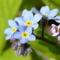 цветы весны :: Валентина. .