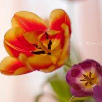 Тюльпаны :: Жанна Рафикова
