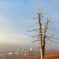 Вид с горы :: Сергей Карцев