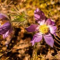 Прогулка по лесу :: Борис Устюжанин