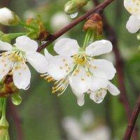 ...И вечная весна! :: Вячеслав Медведев