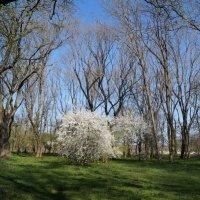 Весенний Николенкский парк :: Дина Дробина