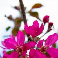 Цветы весны :: Оксана Кузьмина